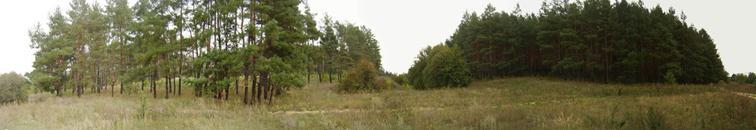 панорама, сосновый бор